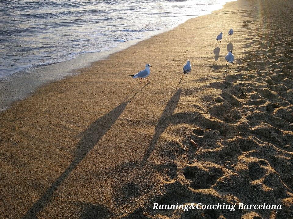 liberte du programme running and coaching